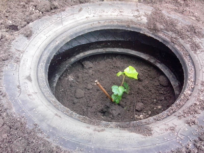 http://fazenda-molier.ucoz.ru/_fr/1/s6937332.jpg