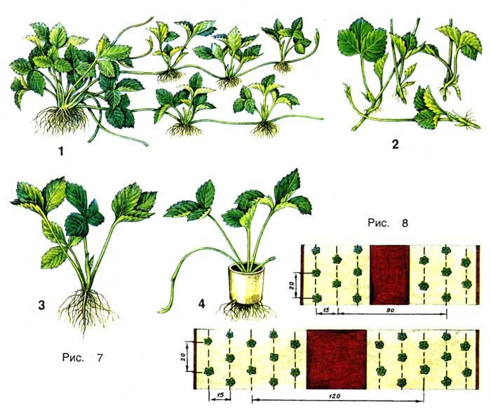 схемы посадки (рис.8).