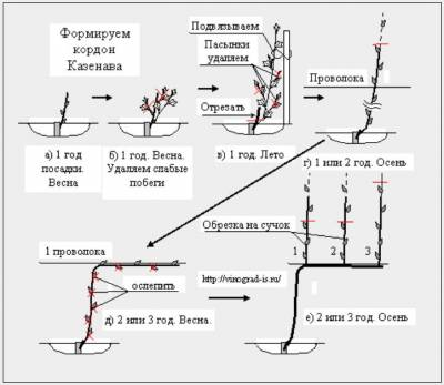 Рис. 2 Схема выращивания